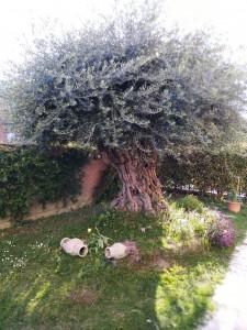 5 - giardino bis