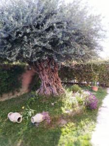 4 -giardino